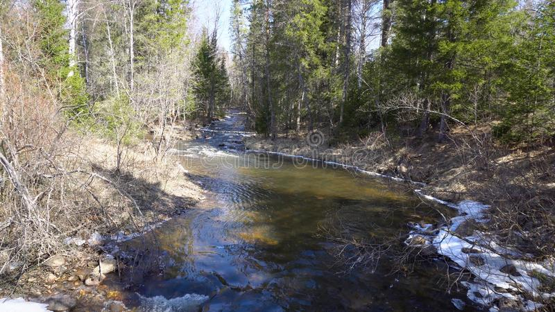 Mountain river flowing among forest with melting snow in spring. Media. Spring floods fill mountain rivers flowing in stock photos