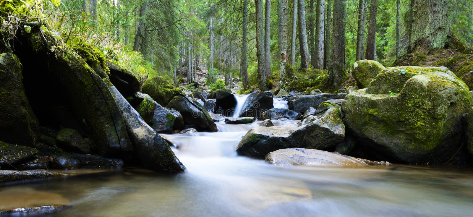 Mountain river flowing through the green forest. Stream in the wood royalty free stock image