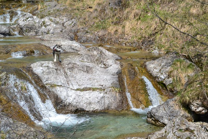 Mountain river flowing into natural basins in a spring sunny day. Mountain river flowing into natural basins in a spring sunny day in a forest of Italian Alps royalty free stock photo