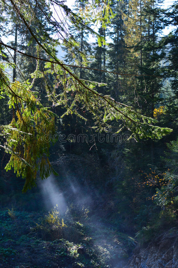 Mountain river, fog and rocks of Carpathian Mountains in Ukraine stock photography