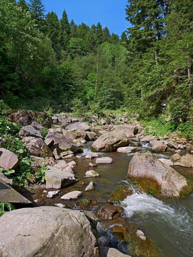 Mountain river in forest in Ukrainian Carpatians. Mountain river in forest with fast stream and big boulders, Carpatians in Western Ukraine, fine summer day stock image