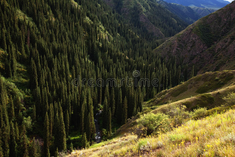 Download Mountain river gorge stock photo. Image of tourism, landscape - 18111946