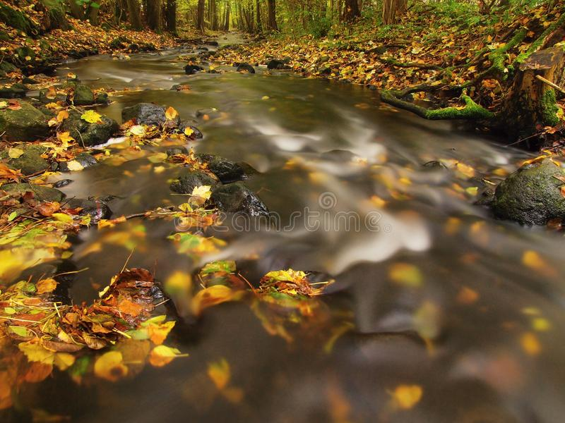 Mountain river with low level of water, gravel with first colorful leaves Mossy rocks and boulders on river bank royaltyfria foton