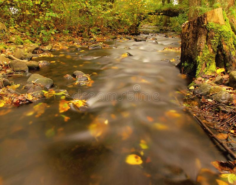 Mountain river with low level of water, gravel with first colorful leaves Mossy rocks and boulders on river bank arkivbild