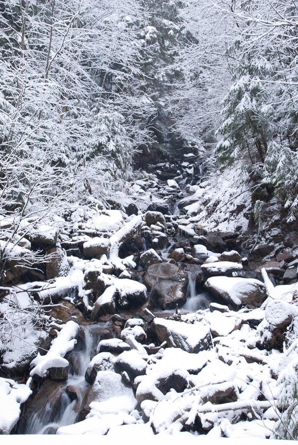Mountain river in the mountain winter forest with snow-covered trees and snowfall stock photos