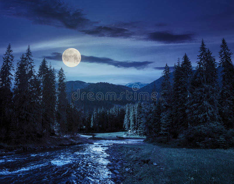 mountain river in pine forest at night stock photo image