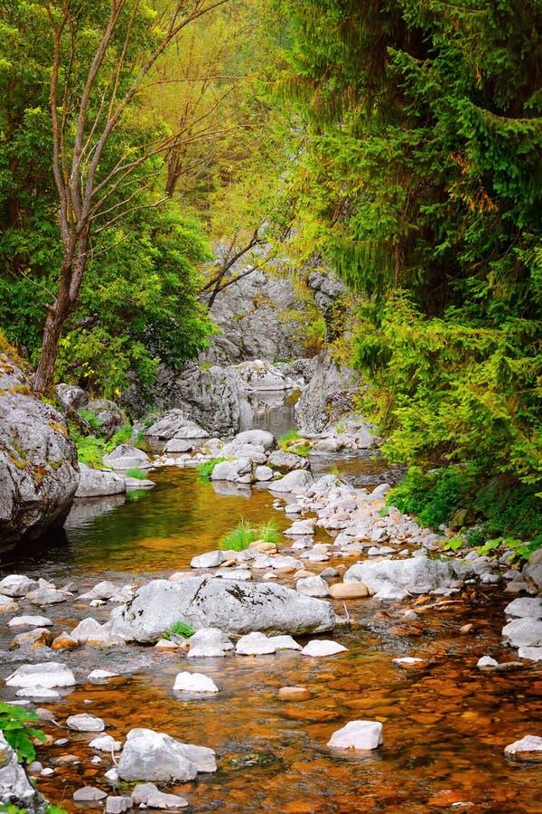 Mountain river in Rhodope Mountains. Mountain river in Trigrad Gorge, Rhodope Mountains in Southern Bulgaria, Southeastern Europe royalty free stock photos