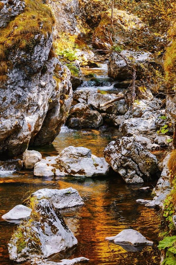 Mountain river in Rhodope Mountains. Mountain river in Trigrad Gorge, Rhodope Mountains in Southern Bulgaria, Southeastern Europe stock photography