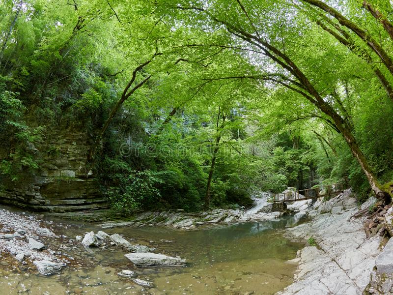 The mountain river in the rocky gorge is surrounded by a green forest. Trees bowed over the water. Spring in the mountains royalty free stock photography