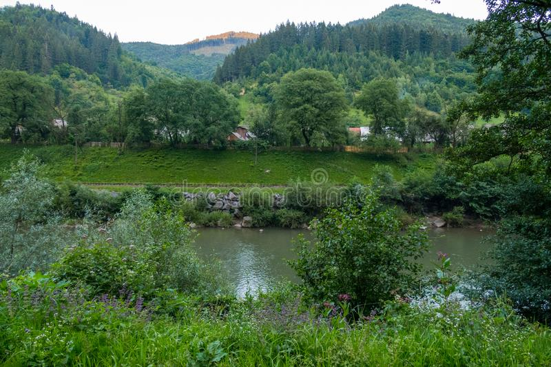 Mountain river with stone banks against the backdrop of a pine forest. For your design stock photos