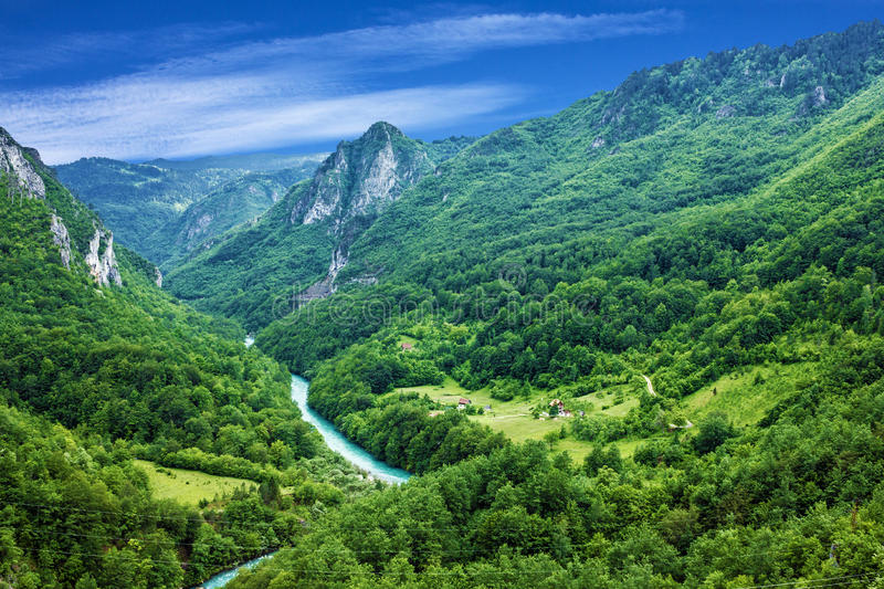 Mountain river Tara and forest in Montenegro.  royalty free stock image