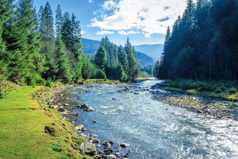 Mountain river winding through forest royalty free stock photo