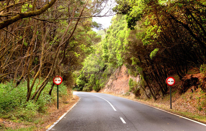 Mountain road in the Garajonay National Park, La Gomera royalty free stock photography
