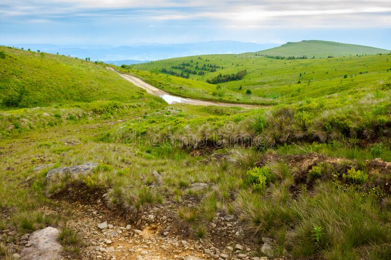 mountain road through grassy meadow stock images
