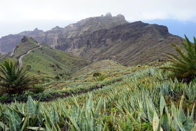 Mountain road. On the La Gomera island, Spain royalty free stock photo