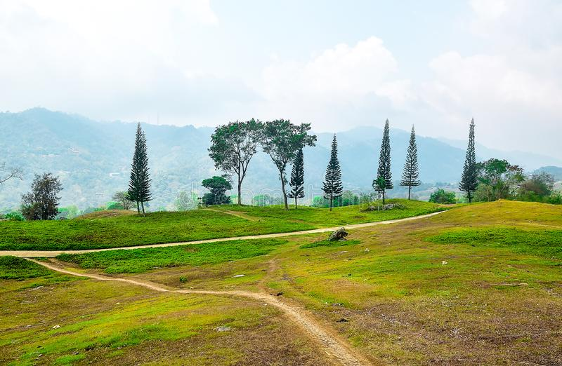 Mountain road with pine tress and grass landscape. A road to mountain with and grass landscape in a foggy background and cloudy skies landscape stock images