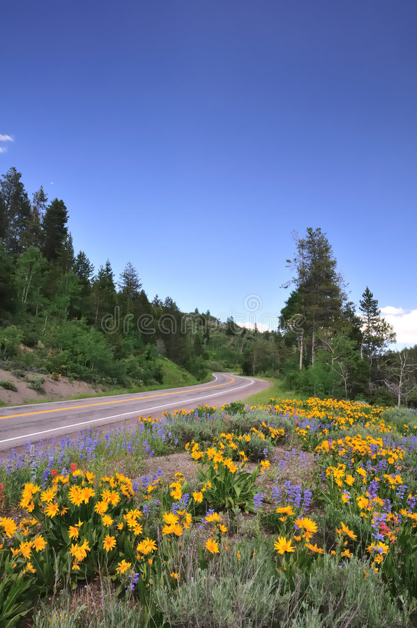 Mountain road with wildflowers stock photography