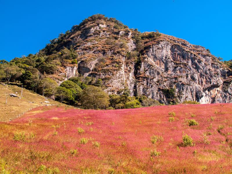 Mountain roch with colored bushes in Brazil. Mountain roch with colored bushes royalty free stock image