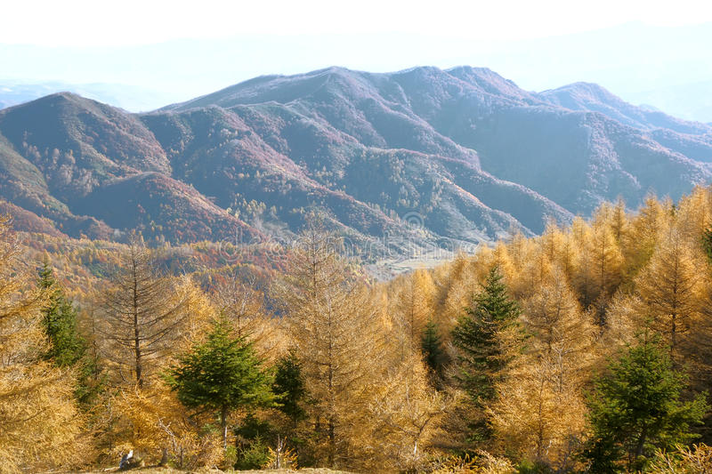 Download Mountain scenery stock photo. Image of larch, landscape - 27060194