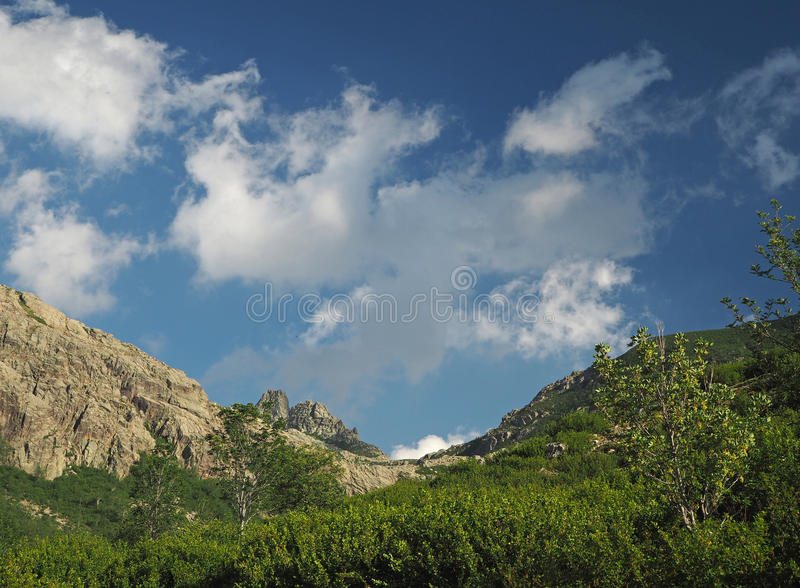 Mountain scenery green valley with alder scrub and birches and w. Hite clouds and blue sky stock photo
