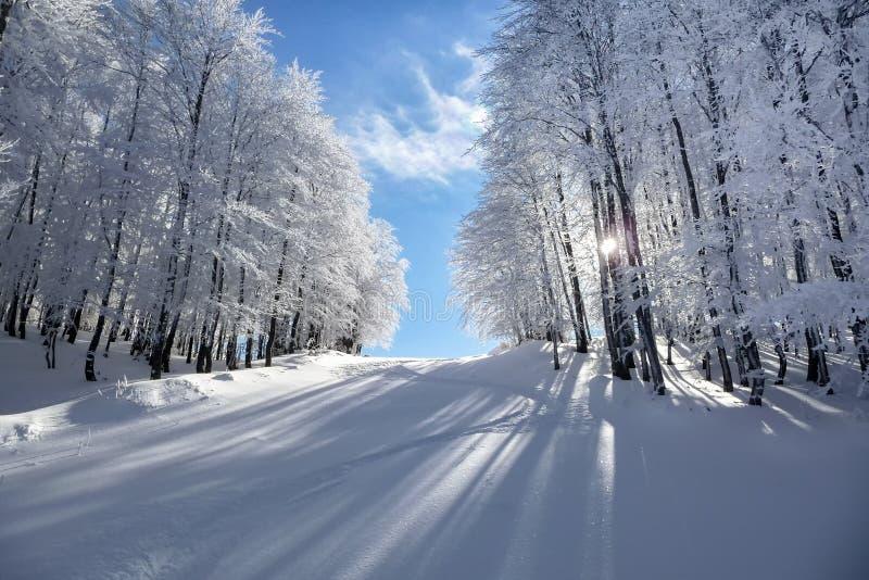 Mountain scenery in Vigla, Florina's ski center, Greece. Mountain scenery in Vigla, Florina's ski center stock photography