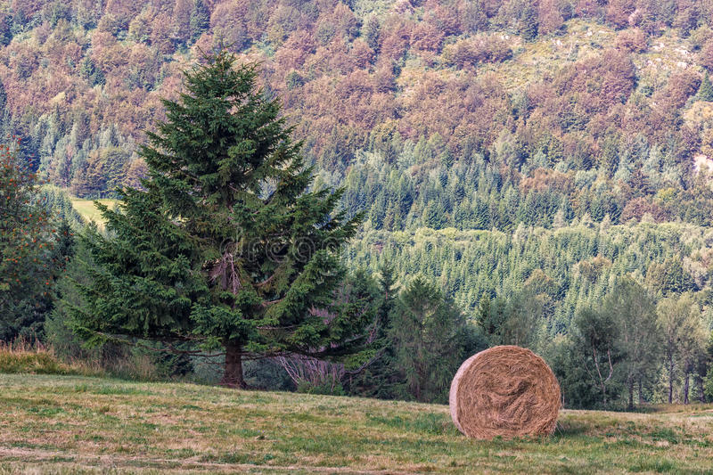 Mountain Sheaf and Tree. Italy