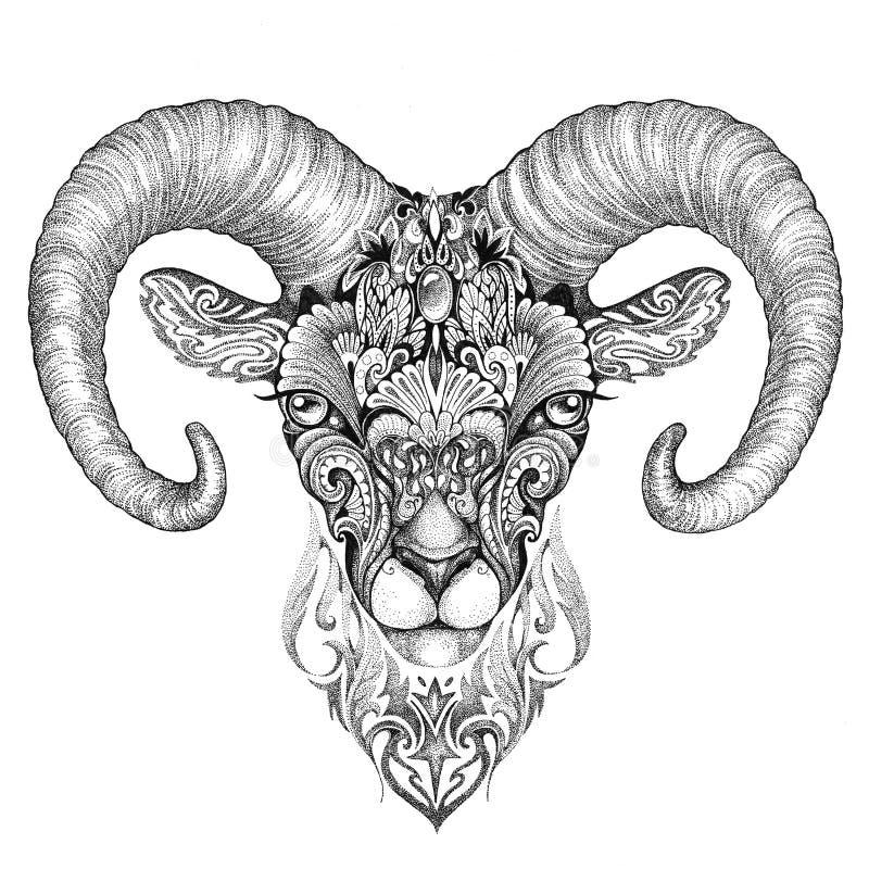 Mountain sheep, argali, black and white ink drawing stock illustration