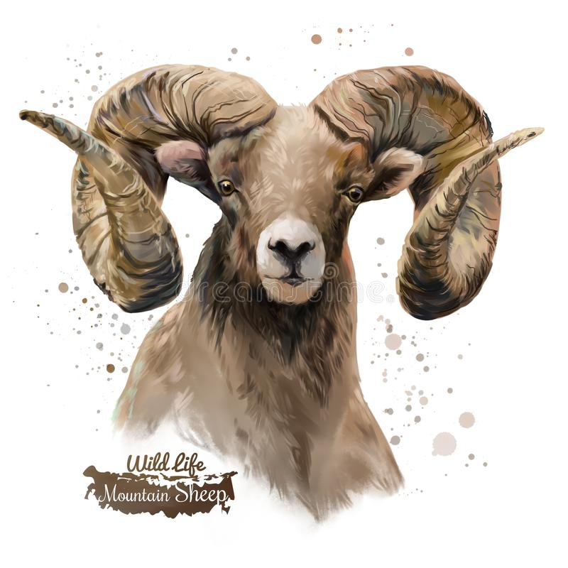 Free Mountain Sheep. Watercolor Painting Royalty Free Stock Photo - 112328395