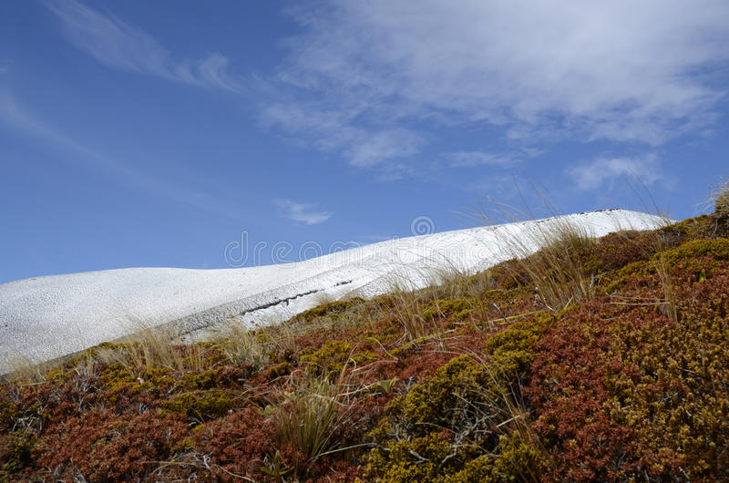 Mountain shrubbery royalty free stock images