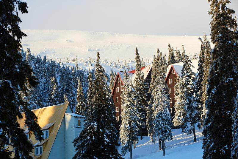 Mountain ski resort winter landscape photo. Tall fir trees and chalet houses covered with snow. Vacation and holiday royalty free stock photography