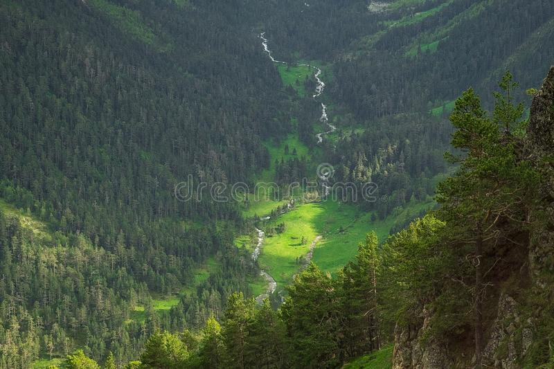 Mountain slopes overgrown with bright green grass and coniferous trees in the morning or evening light royalty free stock images