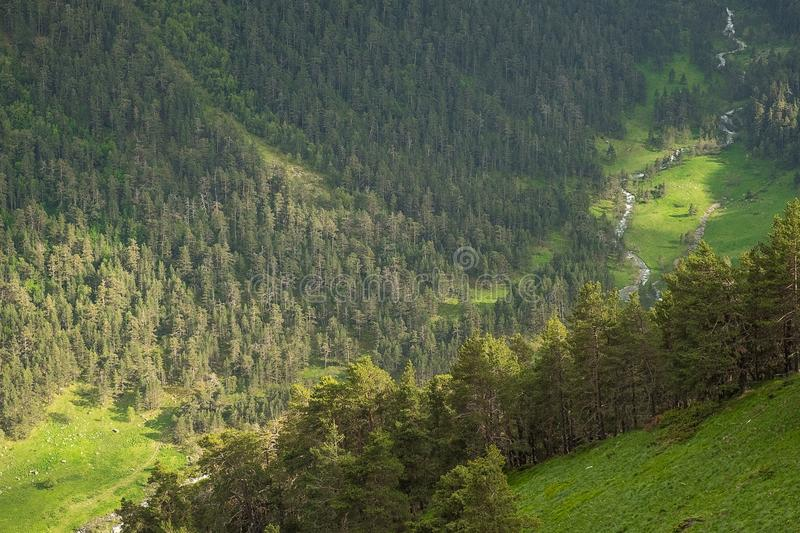 Mountain slopes overgrown with bright green grass and coniferous trees in the morning or evening light royalty free stock photography