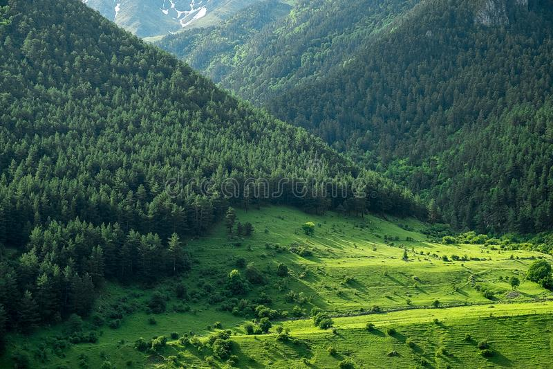 Mountain slopes overgrown with bright green grass and coniferous trees in the morning or evening light stock photos