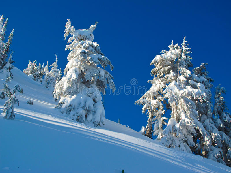 Mountain Snow stock photos