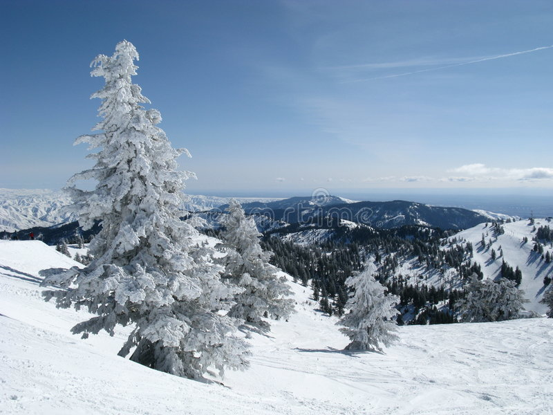 Mountain Snow Tree stock photo