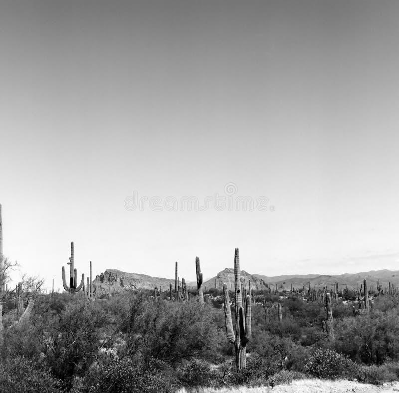 Sonora Desert Arizona. Mountain in the Sonora desert in central Arizona USA stock photography