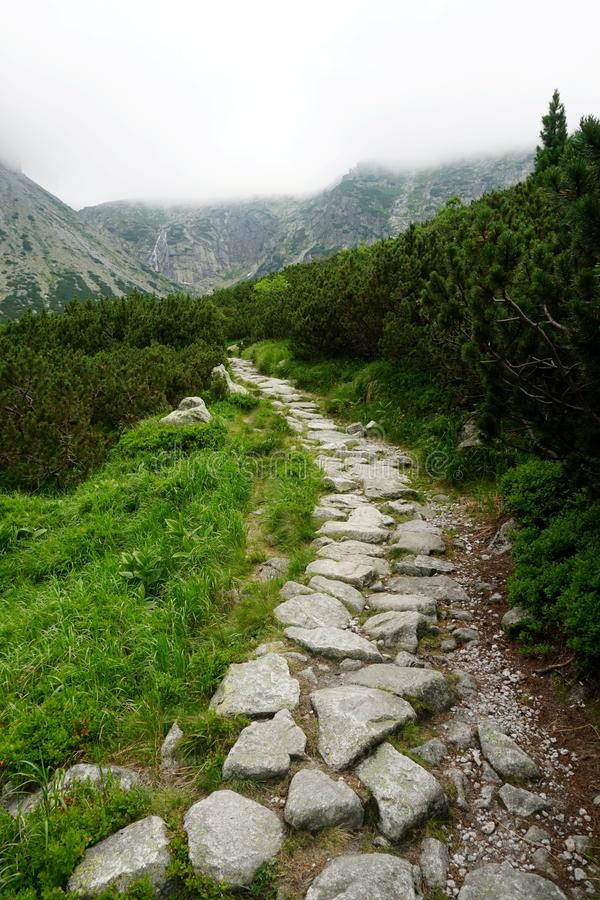Mountain stone trail through forest in High Tatras. royalty free stock photos