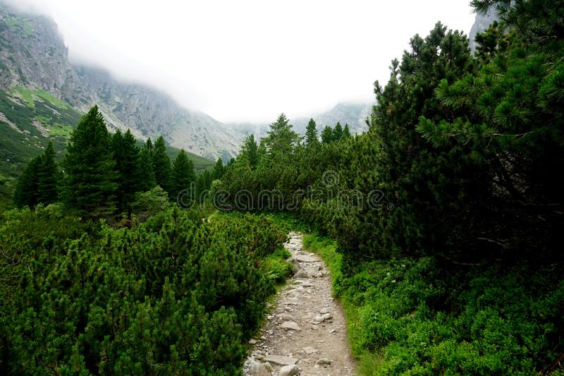 Mountain stone trail through forest in High Tatras. Mountain road in the forest.Journey through the Carpathi royalty free stock photos