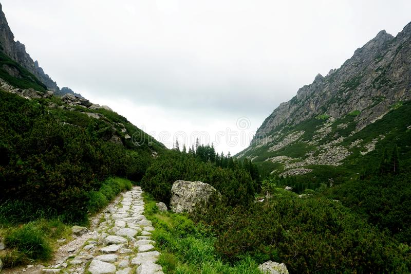 Mountain stone trail through forest in High Tatras. royalty free stock photography