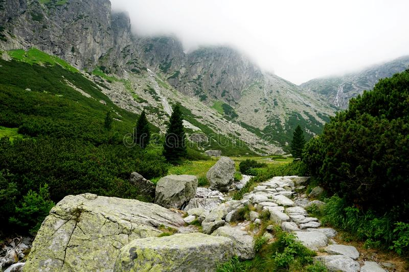 Mountain stone trail through forest in High Tatras. royalty free stock images
