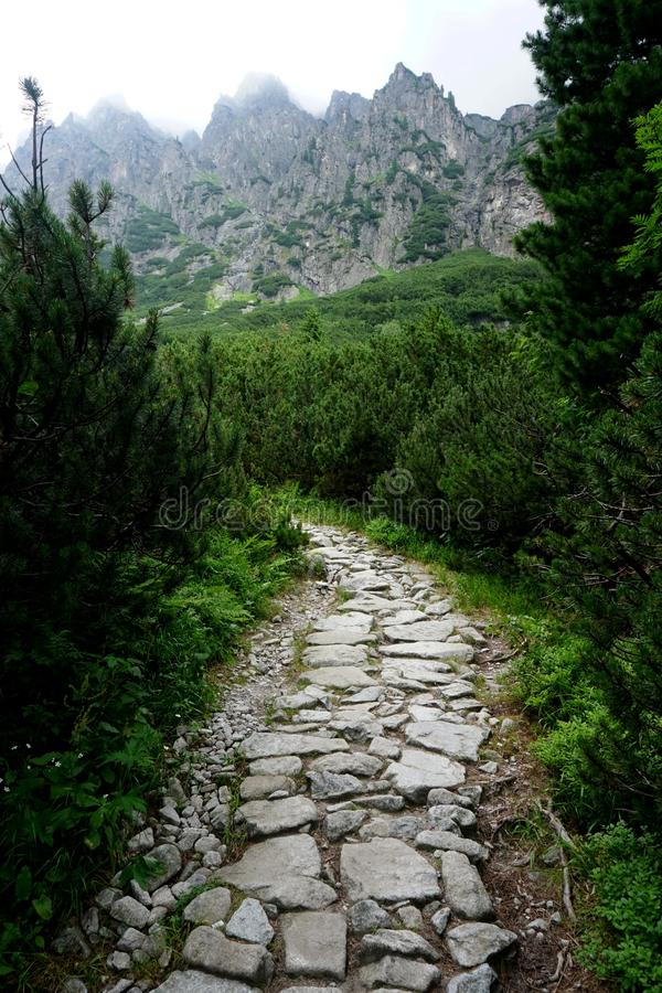Mountain stone trail through forest in High Tatras. Mountain road in the forest.Journey through the Carpathi royalty free stock image