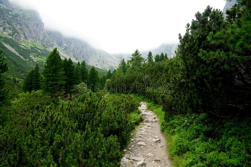 Mountain stone trail through forest in High Tatras. Mountain road in the forest.Journey through the Carpathi stock photos