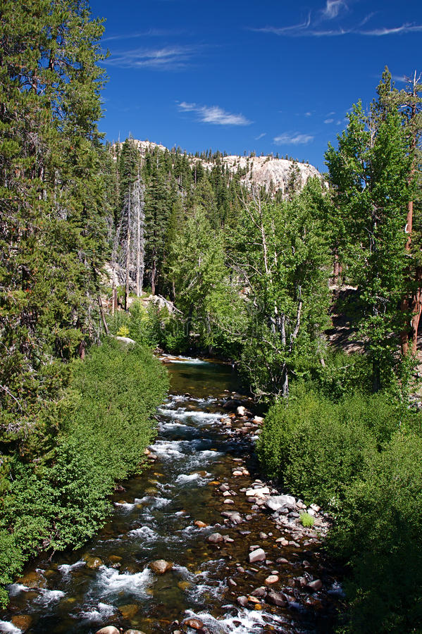 Download Mountain Stream stock image. Image of national, forest - 11629059
