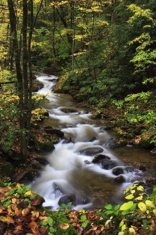 Free Mountain Stream Stock Photo - 11663990