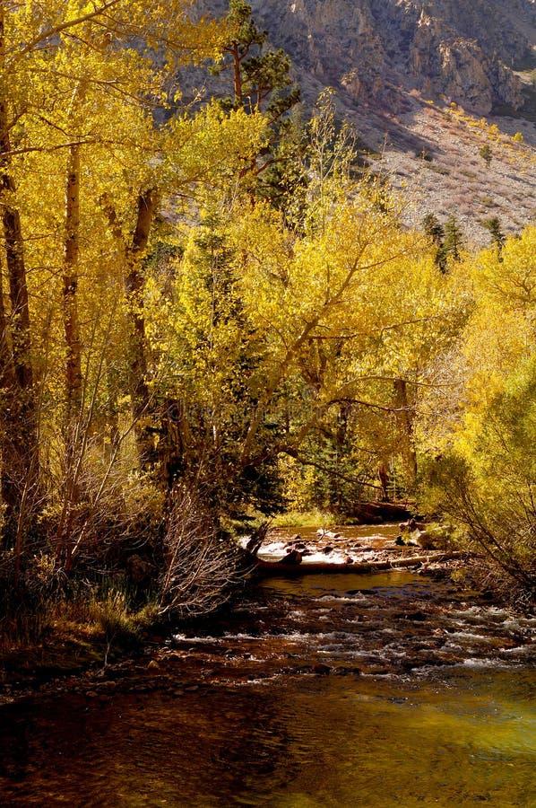 Free Mountain Stream 2 Royalty Free Stock Photos - 1467548