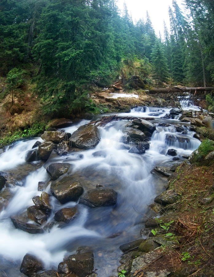 Mountain stream. In the pine forest royalty free stock image
