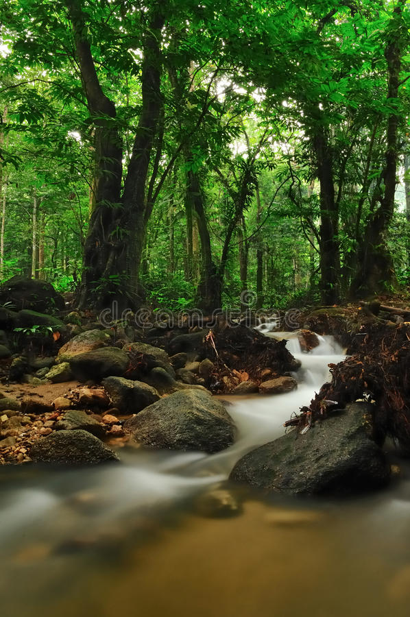 Download Mountain stream stock image. Image of flowing, light - 25082613