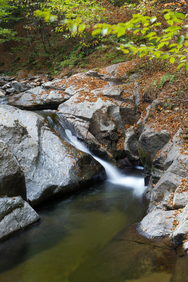 Download Mountain stream stock image. Image of plant, woods, mountain - 26925487