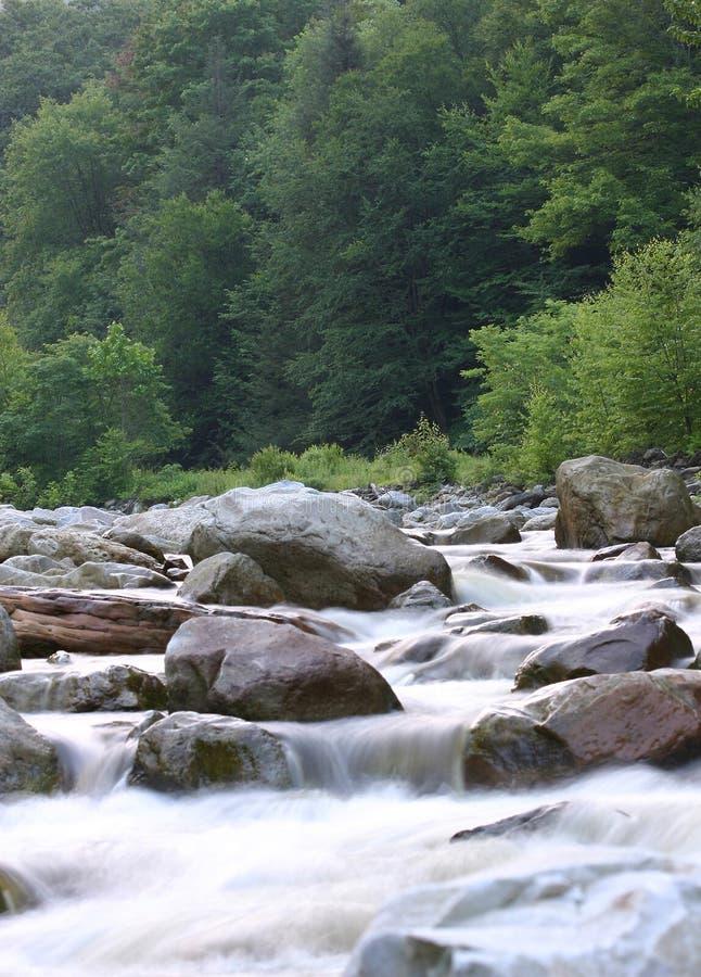 Mountain Stream royalty free stock image