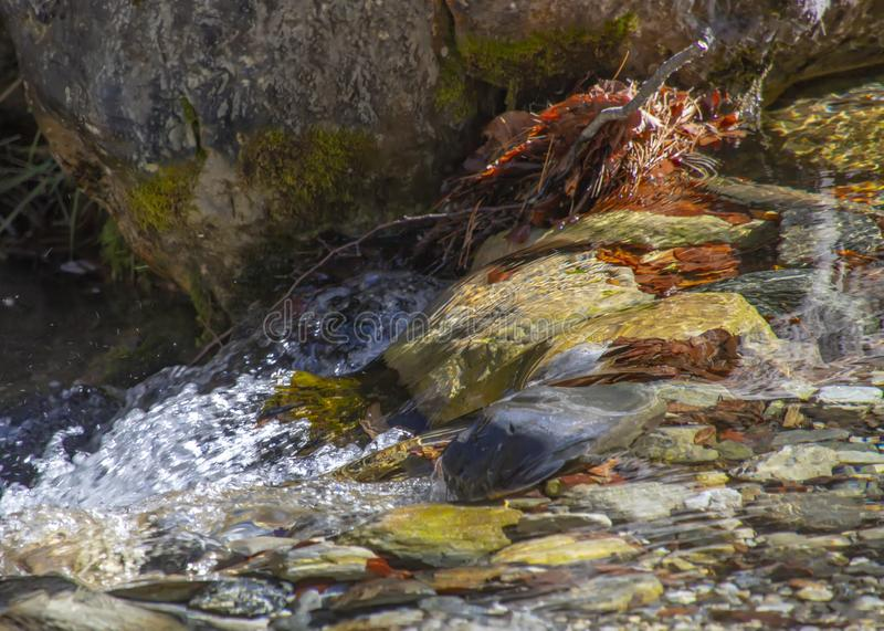 Mountain stream with clear water and autumn leaves flowing along the banks between boulders royalty free stock photos